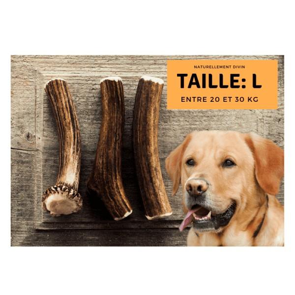 Bois de cerf pour chien entier : Taille L