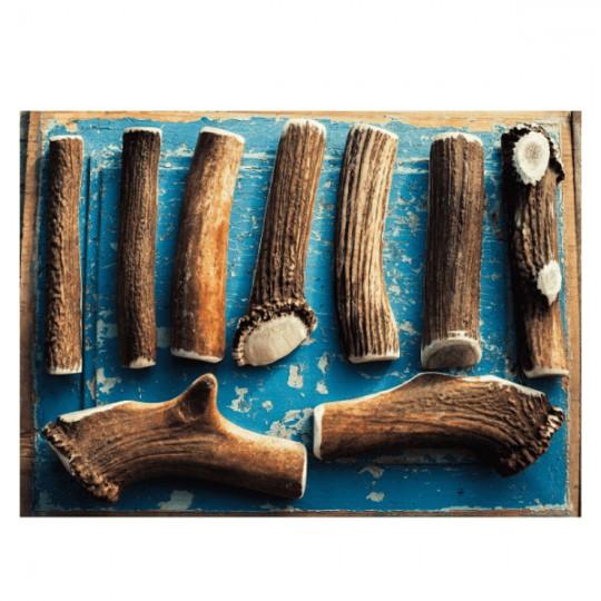 Bois de cerf entier pour Berger Australien : Taille L