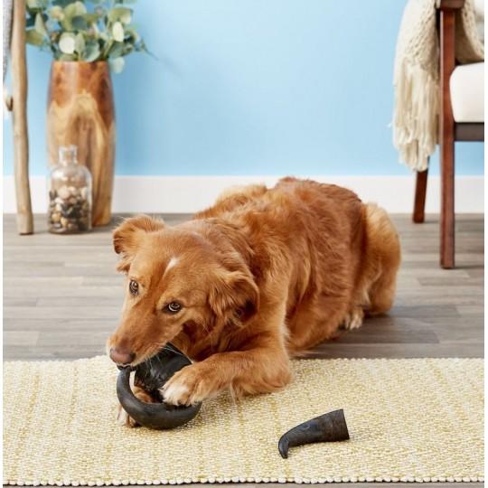 Corne de buffle pour chien
