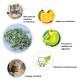 Matatabi les avantages et les bienfaits pour votre chat
