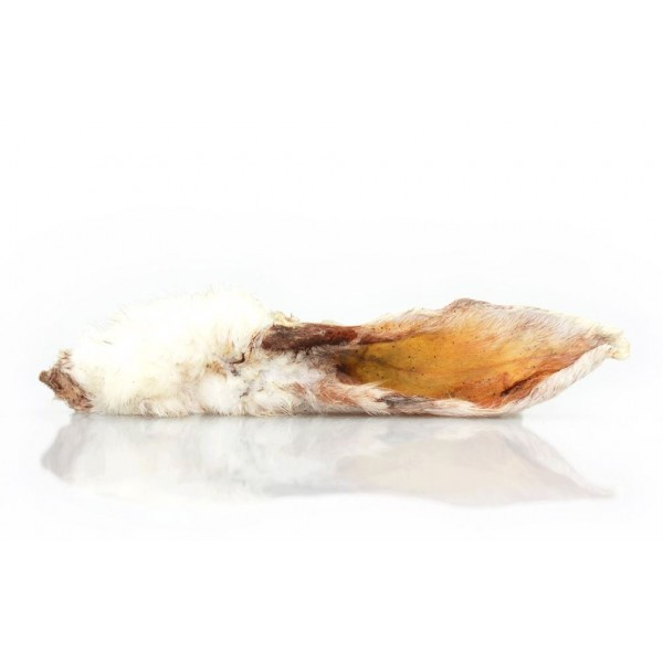 Oreille de lapin pour chien avec poils