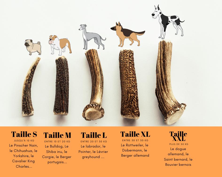 tailles des bois de cerfs en fonction de la race du chien