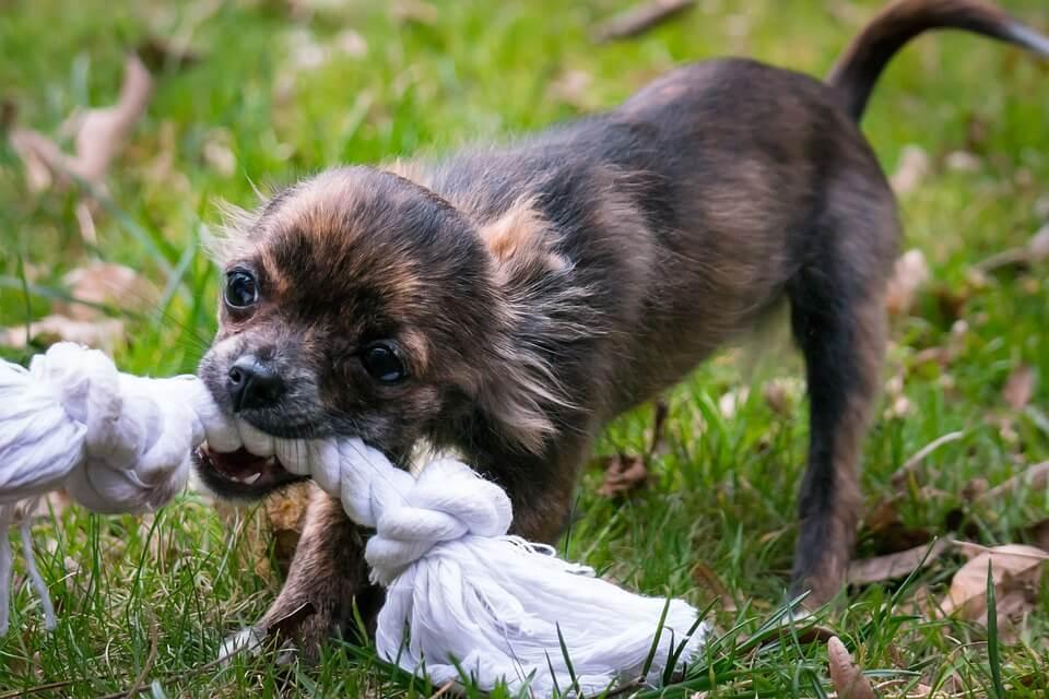 jouet à corde pour chien