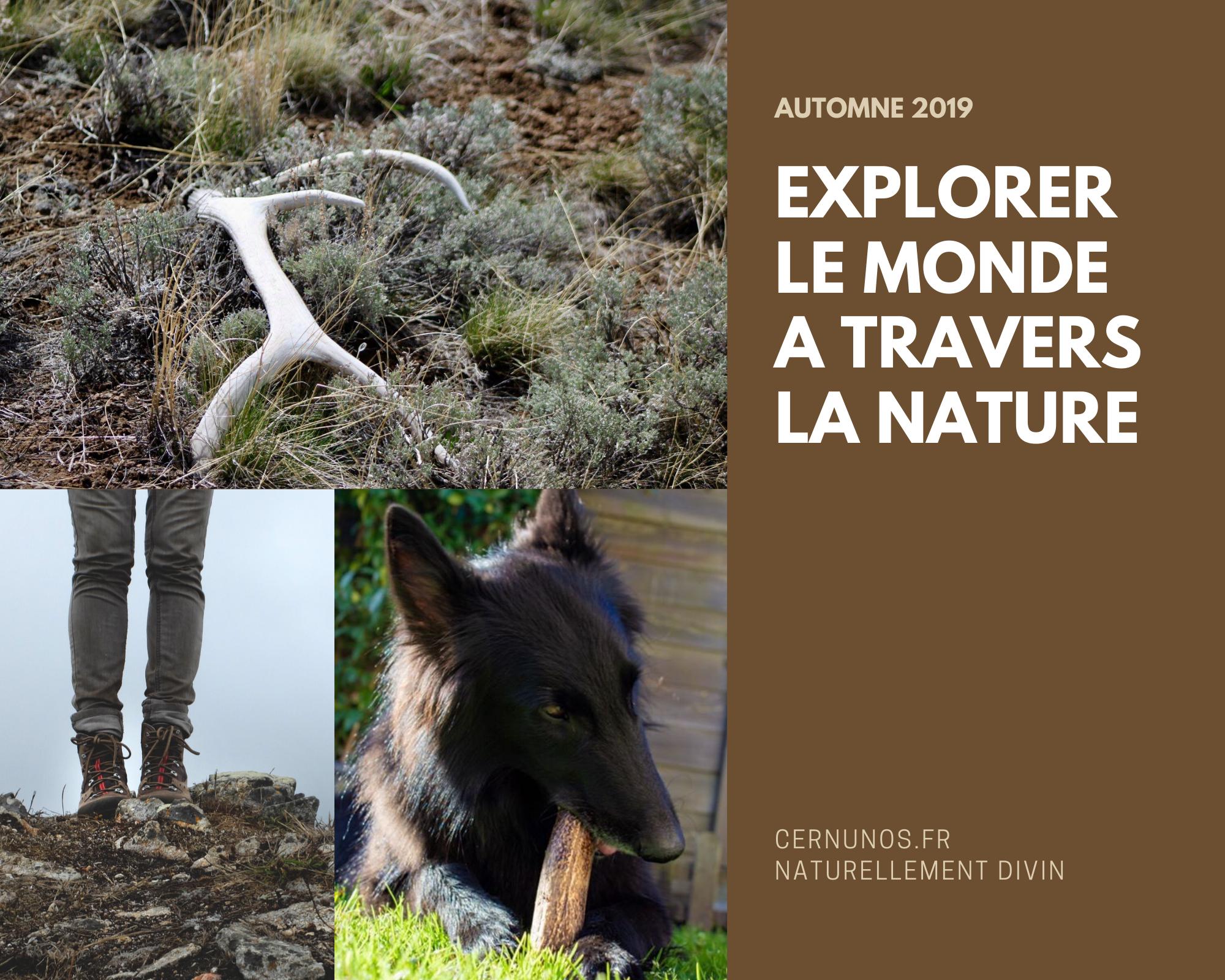 bois de cerf explorer le monde à travers la nature