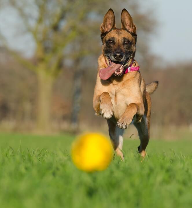 jouet balle pour chien