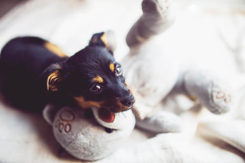 Jouet peluche pour chien