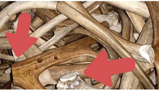 bois de cerf issus de la mue naturelle