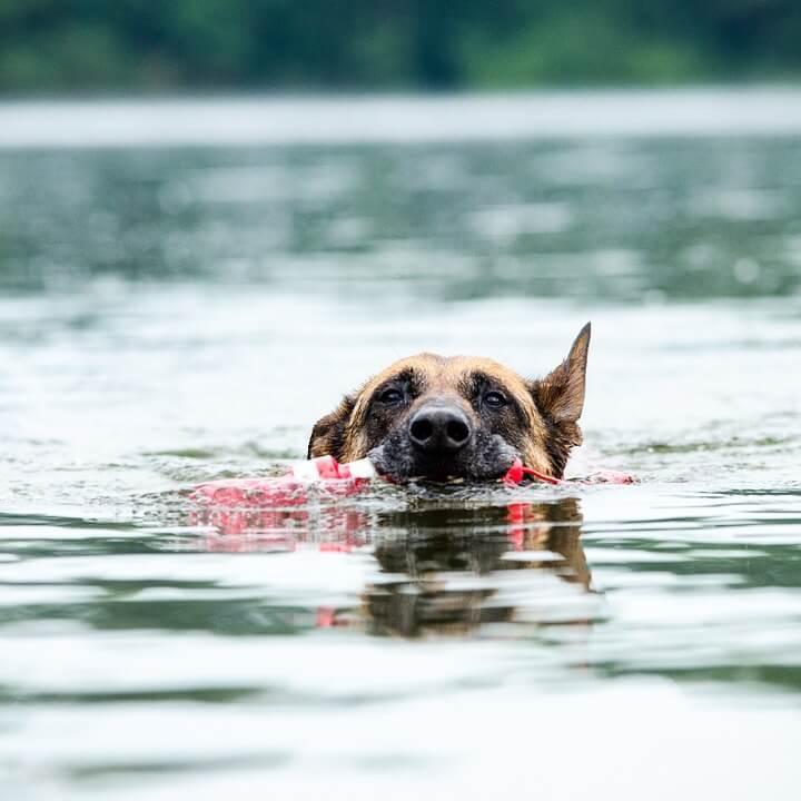 jeu d'eau pour chien