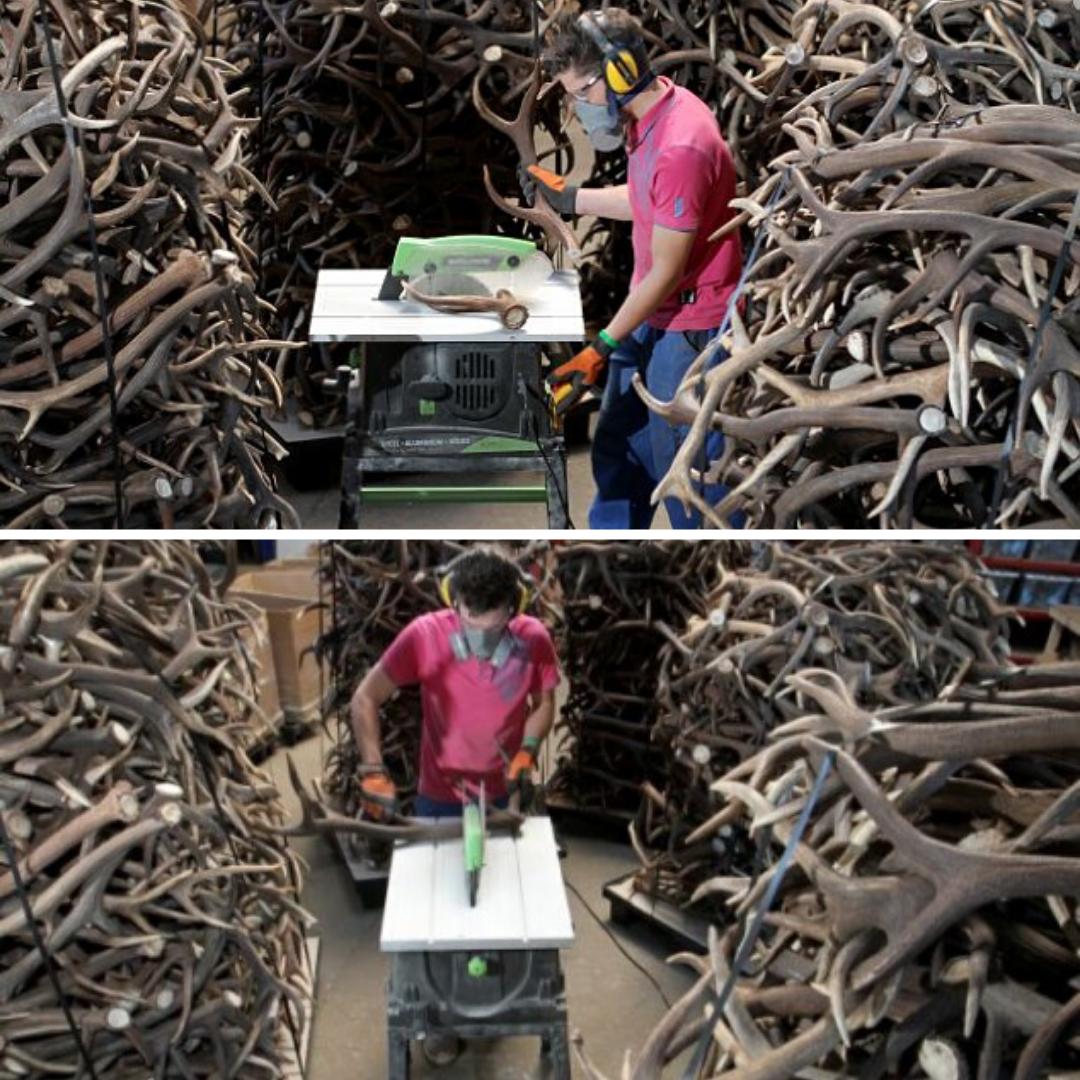 atelier découpage bois de cerf