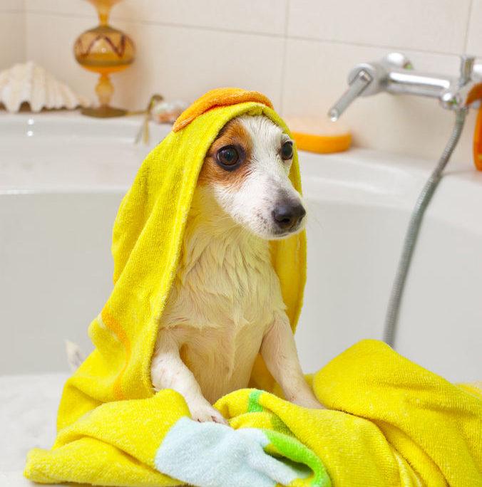 chien odeur bain