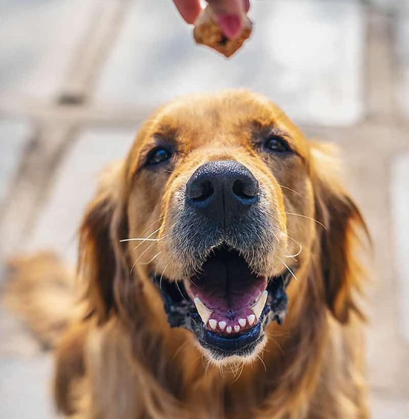 friandise pour chien dressage