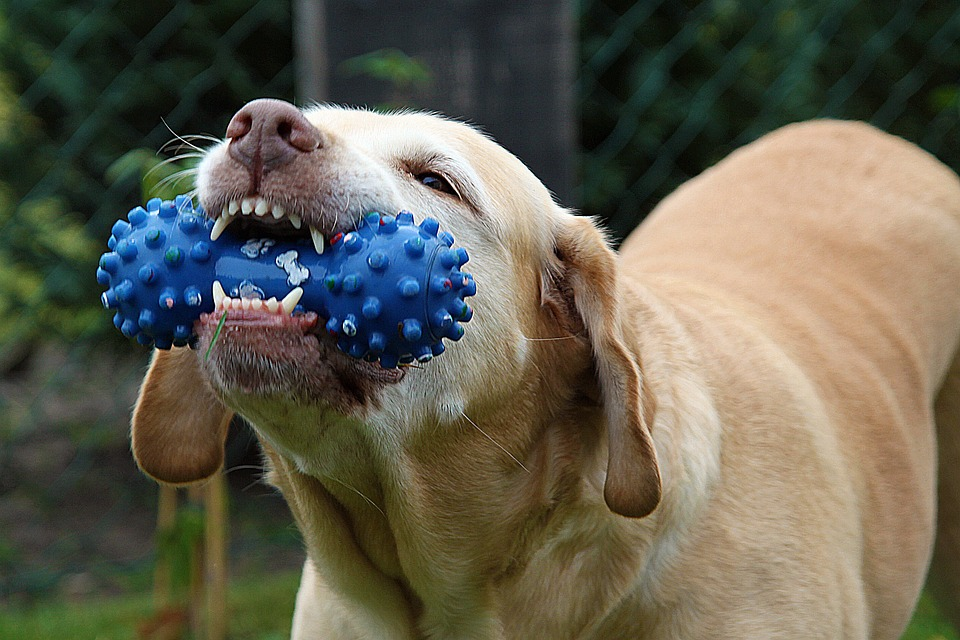jouet pour chien plastique