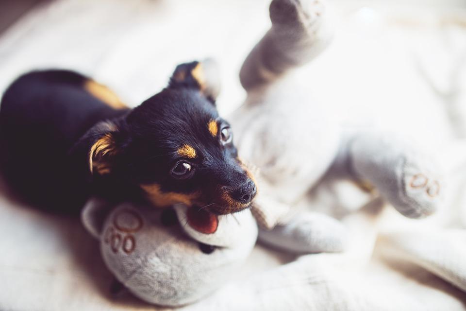 peluche pour chien